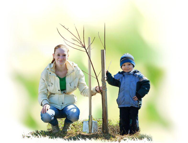 экологическое движение круг жизни